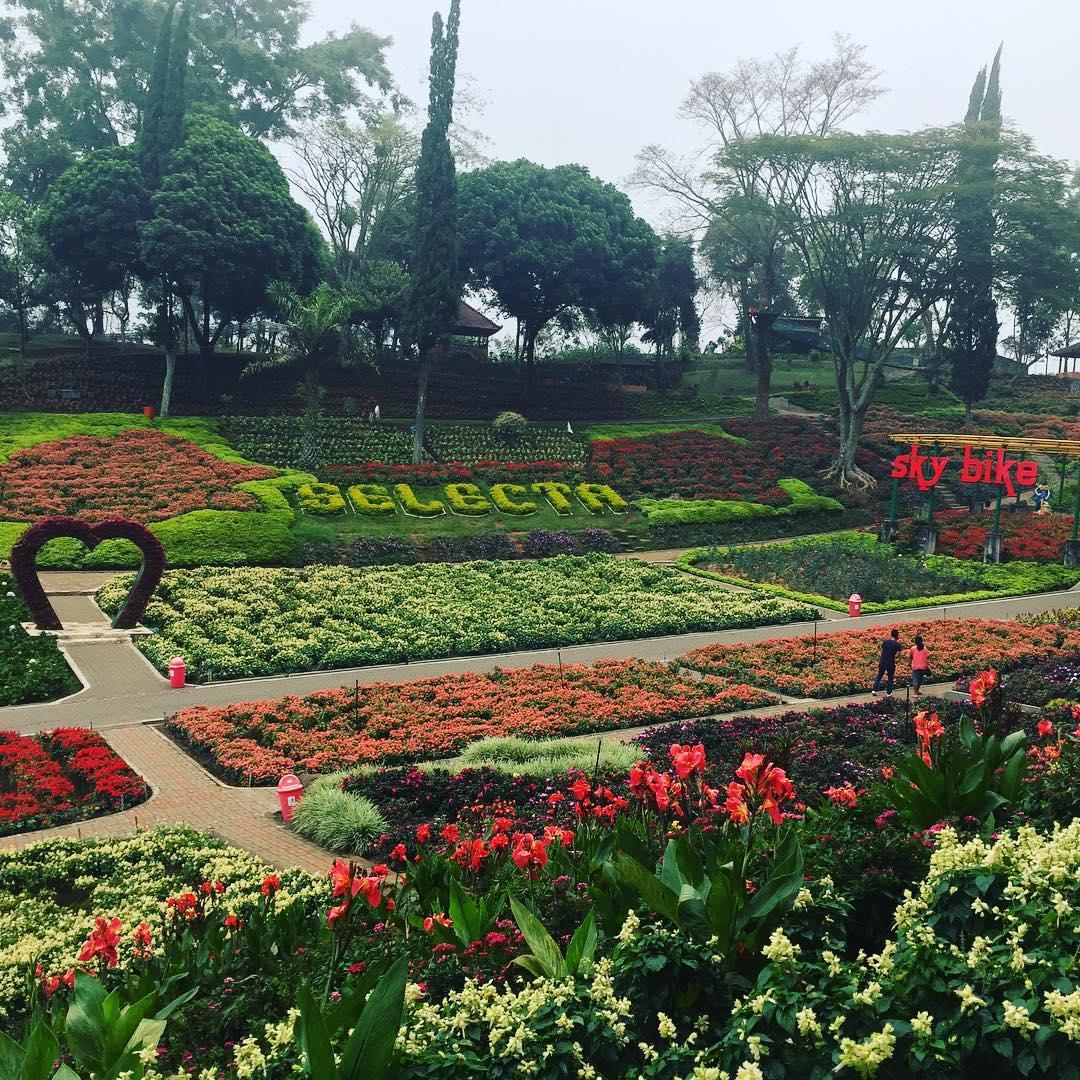 Promo Paket Tour Batu Free N Easy 3 Hari 2 Malam Voucher Hotel Golden Tulip Taman Bunga Selecta Kota Wisata