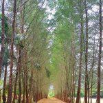 bangka-botani-garden