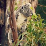 featherdale-wildlife-park-admission