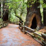 giant-woods