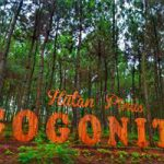 hutan-pinus-gogoniti
