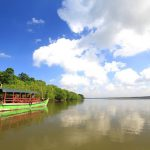 mangrove-bedul