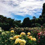 mona-vale-gardens