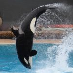 sea-world-san-diego