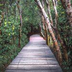 wisata-mangrove-wonorejo