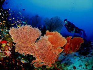 Aceh International Diving Festival @ Pantai Gapang, Kota Sabang